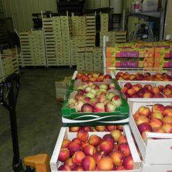 04 Fruits Domaine Nebout Vins Saint pourcain Allier Auvergne